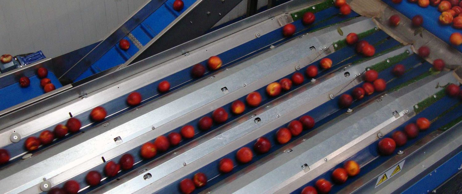 fruit sorting equipments
