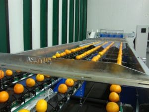 Citrus fruit sorting line process