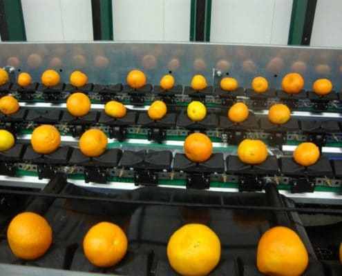 Citrus fruit sorting grading