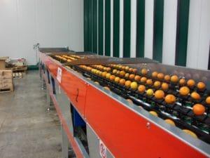 Citrus fruit grading equipments