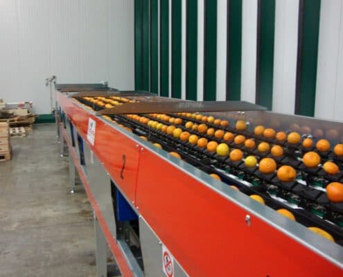 Citrus fruit grading equipments
