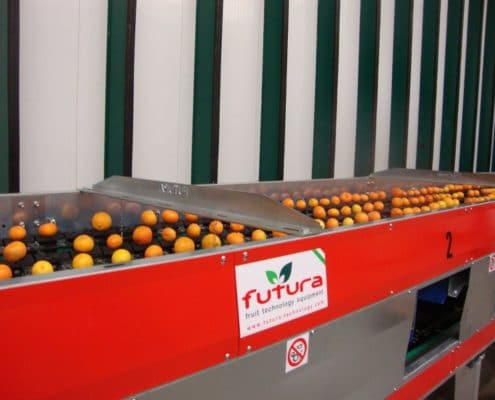 Citrus fruit grading machine