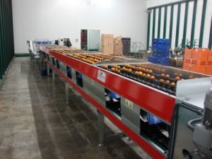 Citrus fruit grading line