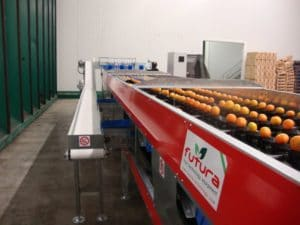 Citrus fruit sorting line