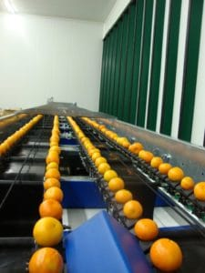 Citrus fruit sorting machine