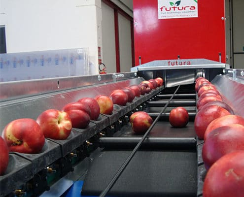 Fruit grading line with central discharge