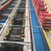 Mango sorting machine