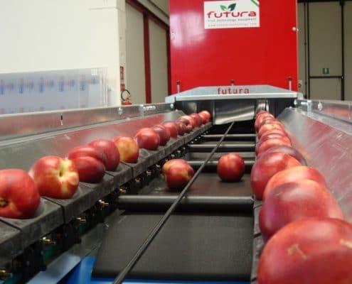 Peaches grading machine