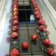 Peaches sorting line