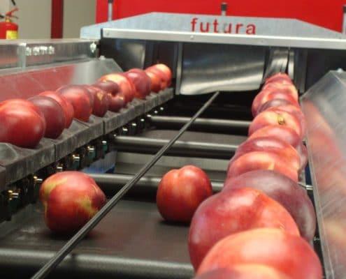 Peaches sorting machine