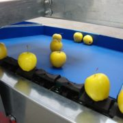 Apple sorting equipments