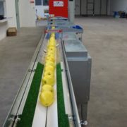 Apple sorting machine