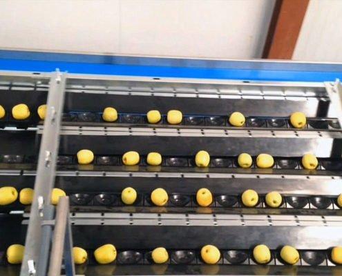 Fruit grading central discharge