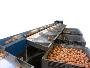 Garlic Onion Sorting Machine