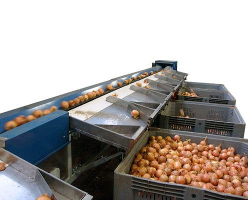 Garlic Onion Sorting Machine