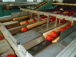Peppers grading machine